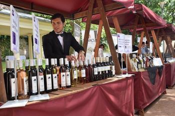 vinařské slavnosti